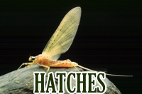 hatches-box-new