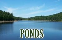 ponds-box-new