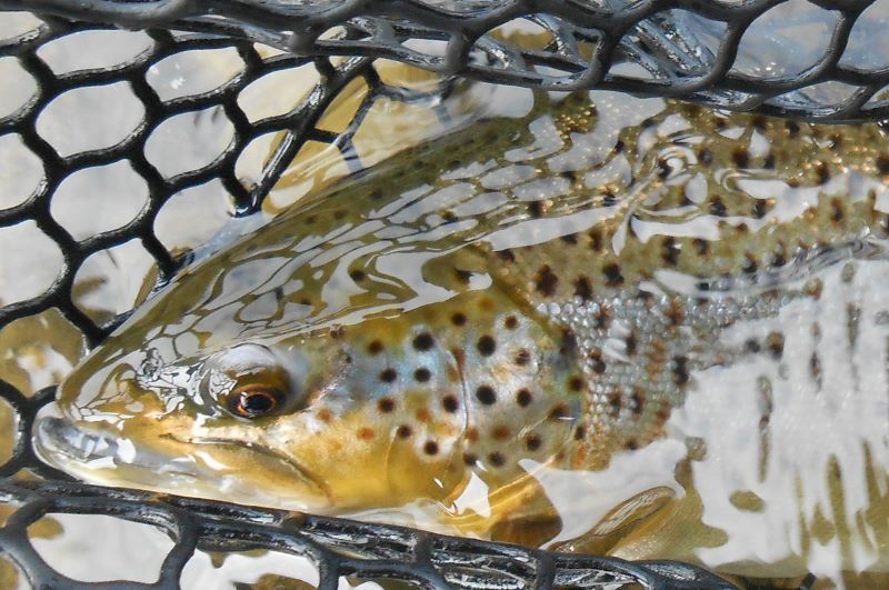 Pittsburg nh fishing report may 2nd 2015 for Murphy s hook house fishing report