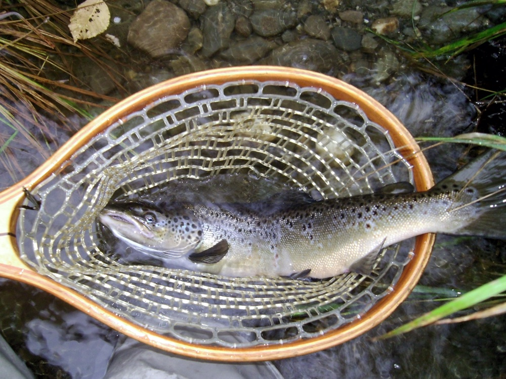 Connecticut river fishing report 10 9 for Salmon river fishing reports