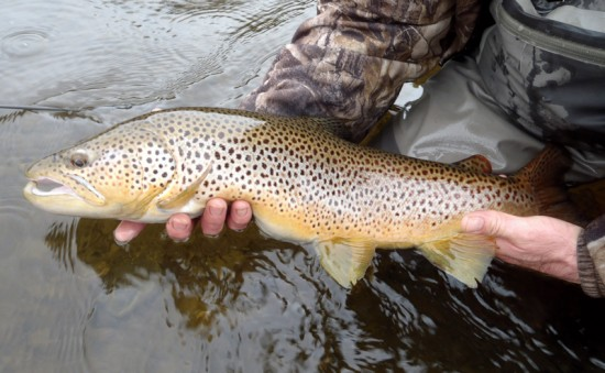 Connecticut River Fishing Report March 15