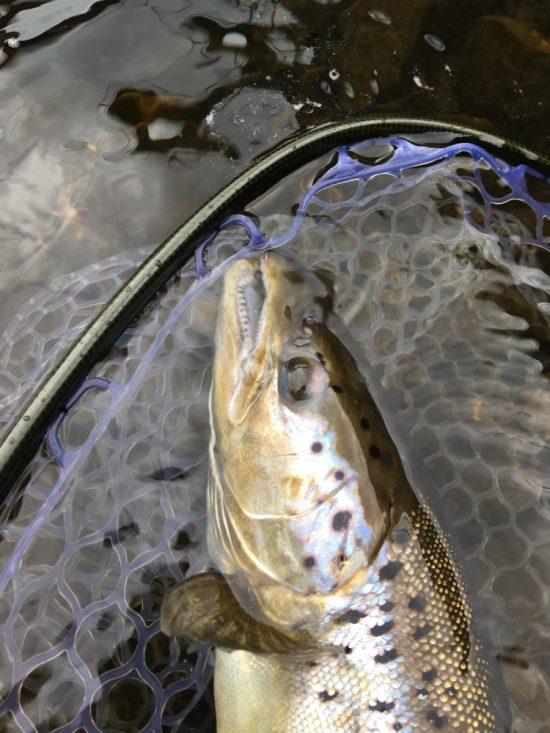 salmon-may-19