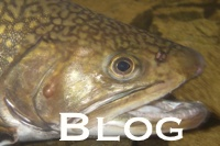 Tall Timber's Fishing Blog